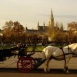 Horse Vienna